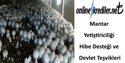 Mantar Yetiştiriciliği Hibe Desteği ve Devlet Teşvikleri