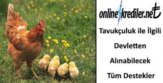 Tavukçuluk ile İlgili Devletten Alınabilecek Tüm Destekler