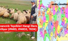 Hayvancılık Teşvikleri Hangi İllere Veriliyor (IPARD, IPARD2, TKDK)