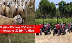 Köyüne Dönene 300 Koyun + Maaş ve 30 bin TL Hibe
