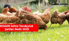 KOSGEB Salma Tavukçuluk Şartları ve Tüm Detayları 2018