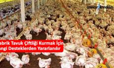 Prefabrik Tavuk Çiftliği Kurmak İçin Hangi Desteklerden Yararlanılır