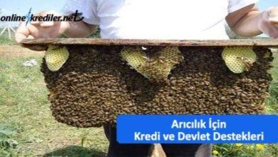 Photo of Arıcılık Kredisi Alma Şartları : Hibe ve Faizsiz Krediler