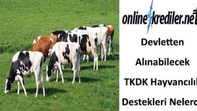 Photo of Devletten Alınabilecek TKDK Hayvancılık Destekleri Nelerdir