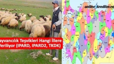 Photo of Hayvancılık Teşvikleri Hangi İllere Veriliyor IPARD-IPARD2-TKDK