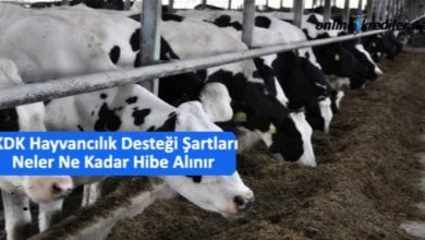 Photo of TKDK Hayvancılık Desteği Şartları Neler Ne Kadar Hibe Alınır